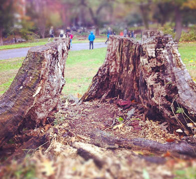 Superstorm Sandy: uprooted tree