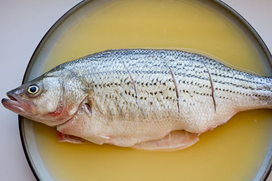 Fish In Chicken Stock