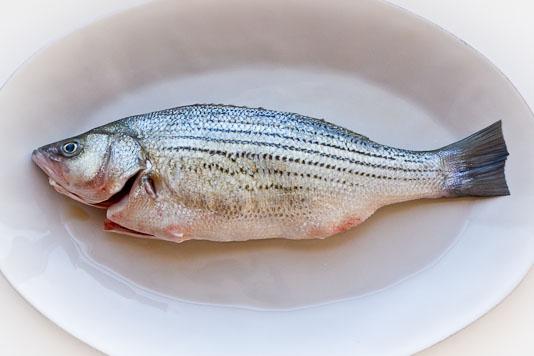 Whole Striped Bass